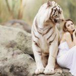 動物霊とはどのような存在か?一覧と役目を解説