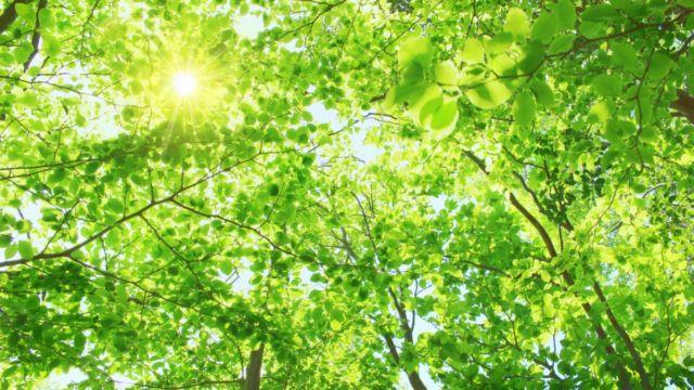 生命エネルギー 木漏れ日 光