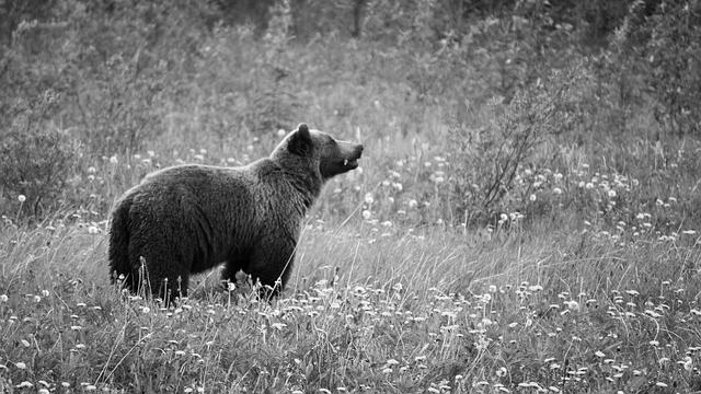 遠くを見る熊 自然 花