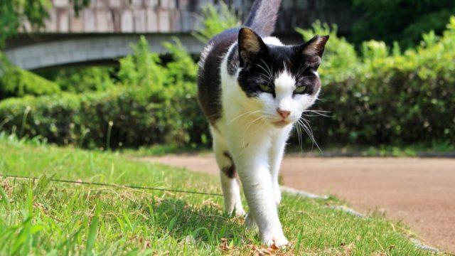 白黒の野良猫