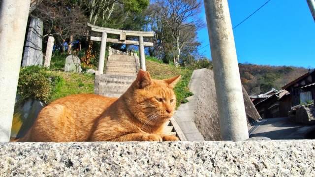 神社にいる猫