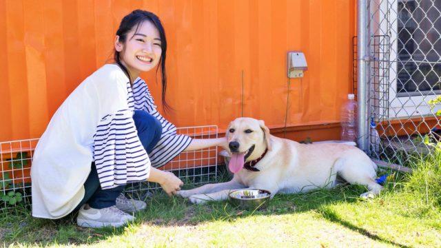 犬と女性 白い犬 ラブラドールレトリバー